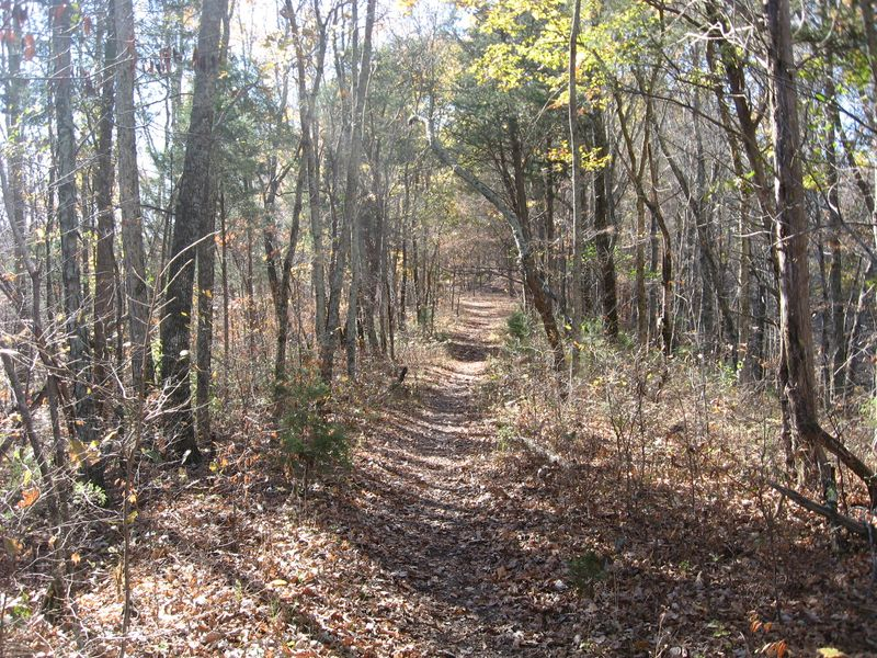The trail 2